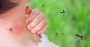 Mosquito-Spread Virus Comes to Florida